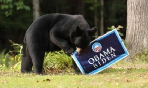 Bears Against Obama