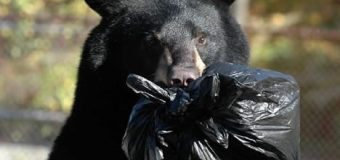 Sorry, N.J., but it's a bear. You've got bigger problems. Get over it.